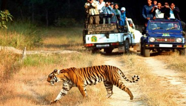 Corbett Tiger Tour